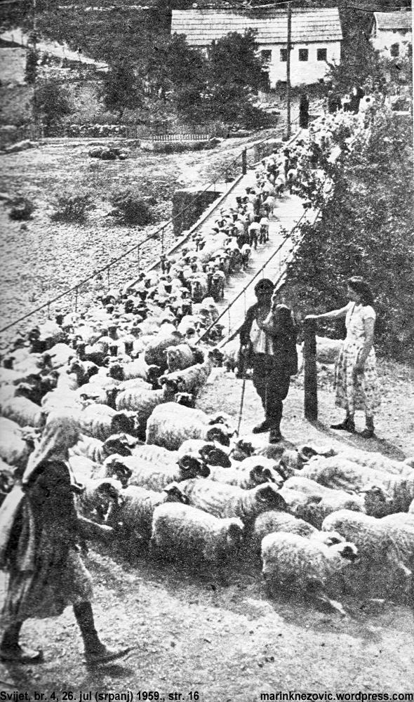 Ovce prelaze Neretvu