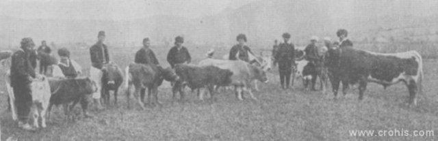 Seljaci sa stokom