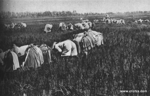 Seljanke na radu u rižinim poljima padske nizine. Usprkos velikom napretku gospodarstva i tehnike između dva svjetska rata i u naprednoj Europi teški fizički rad je neizbježan. O ovome svjedoče i ove seljanke koje rade u rižinim poljima doline Poa.