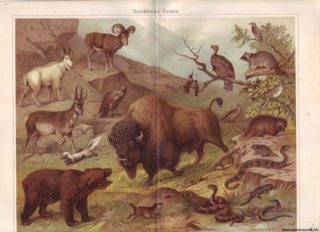 Subartička fauna / Nearktische Fauna