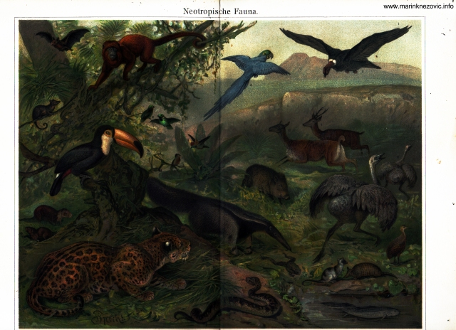 Tropska fauna / Neotropische Fauna